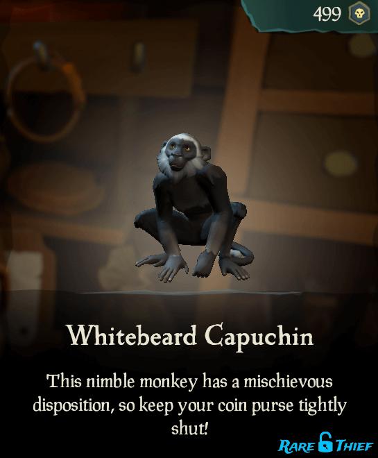 Whitebeard Capuchin