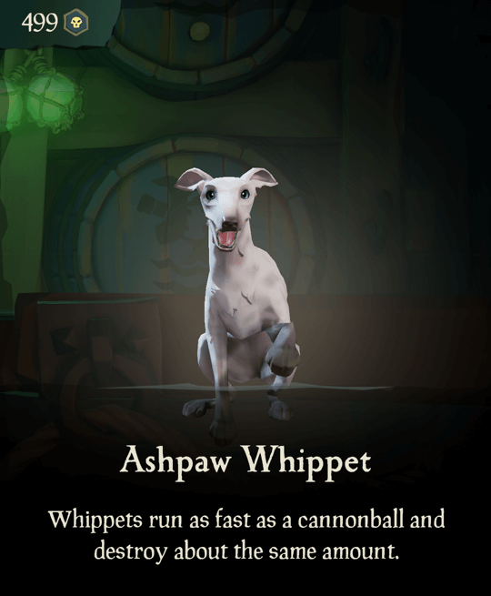 Ashpaw Whippet