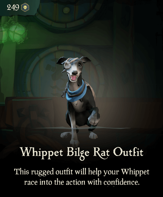 Whippet Bilge Rat Outfit