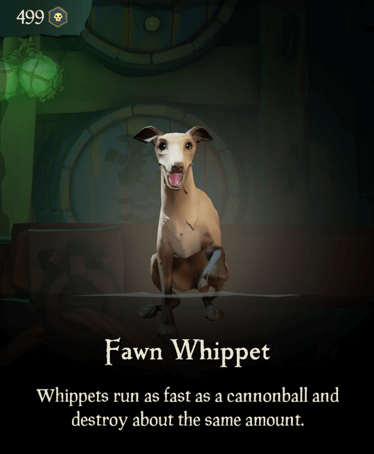 Fawn Whippet
