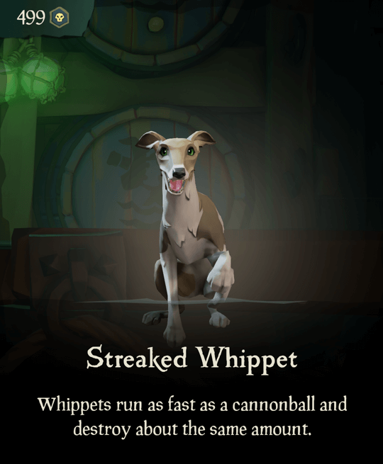 Streaked Whippet